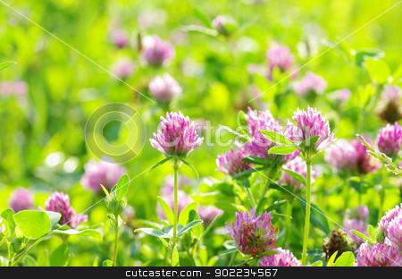 clovers  stock photo, red flower clovers on green background by Vitaliy Pakhnyushchyy