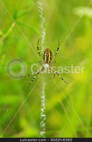 spider    stock photo, Macro of argiope spider on its web                        by Vitaliy Pakhnyushchyy