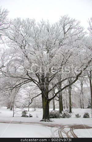 Winter forest stock photo, Snow covered trees in a winter forest by Porto Sabbia