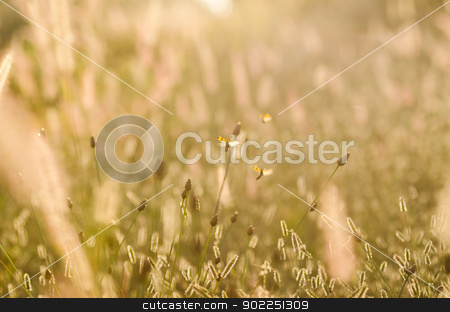 Black spotted yellow beetle in the meadows stock photo, Black spotted yellow beetle  in the meadow nature by sweetcrisis