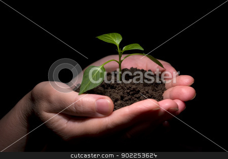 new life stock photo, Hands holdings a little green plant on a black background by Vitaliy Pakhnyushchyy