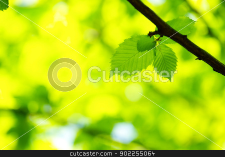 green leaves  stock photo, green leaves background in sunny day by Vitaliy Pakhnyushchyy