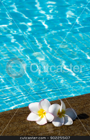 flowers stock photo, Tropical flower Plumeria  on swimming pool by Vitaliy Pakhnyushchyy