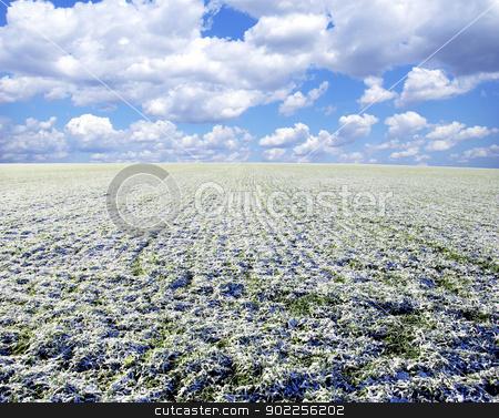 winter field  stock photo, winter field and clouds in sky by Vitaliy Pakhnyushchyy