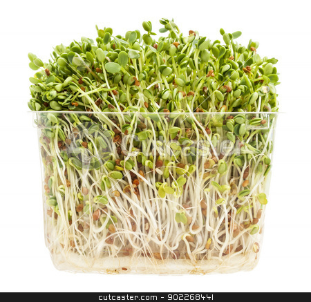 clover and radish sprouts stock photo, clover and radish sprouts in a transparent plastic container isolated on white by Marek Uliasz