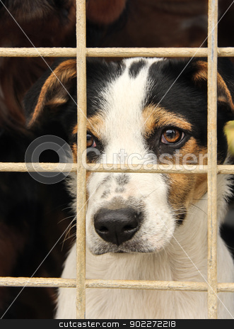 dog in a cage stock photo, the potrait of a sad looking dog in an iron cage by SkyLynx