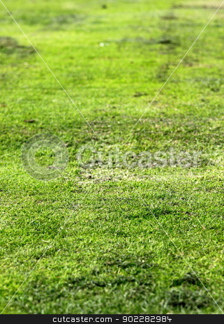 Old Green Grass stock photo, Old grunge green textured grass as background. by Henrik Lehnerer