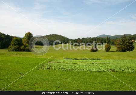 Green meadows with forest stock photo, Green meadows landscape with forest by dinozzaver