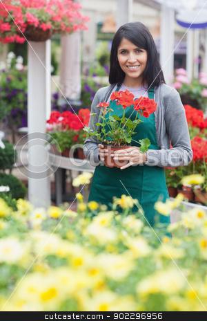 Garden center worker holding a red flower stock photo, Garden center worker holding a red flower in garden centre by Wavebreak Media