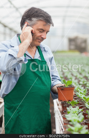 Greenhouse worker holding seedling and phoning stock photo, Greenhouse worker holding potted seedling and phoning in greenhouse by Wavebreak Media