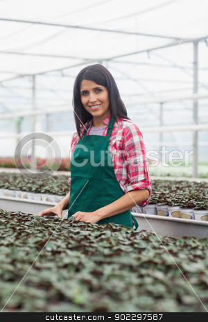 Woman standing beside row of seedlings stock photo, Woman standing beside row of seedling in green house by Wavebreak Media