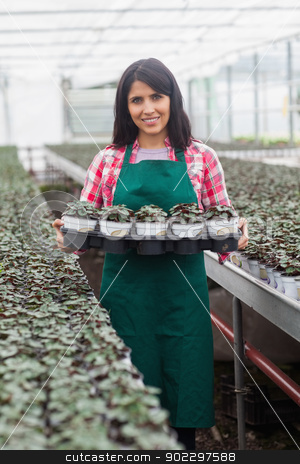 Worker carrying tray of plants in greenhouse stock photo, Female worker carrying tray of plants in greenhouse and smiling by Wavebreak Media