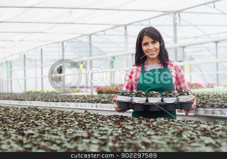 Woman carrying a box of plants stock photo, Woman carrying a box of plants working in greenhouse by Wavebreak Media