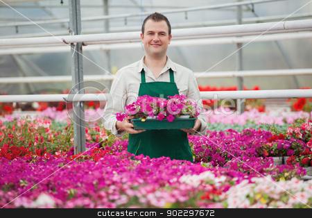 Man holding array of flowers in greenhouse stock photo, Man holding a box of flowers working in a greenhouse in garden center by Wavebreak Media