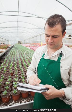 Greenhouse worker taking notes  stock photo, Greenhouse worker taking notes in seedlings in nursery by Wavebreak Media