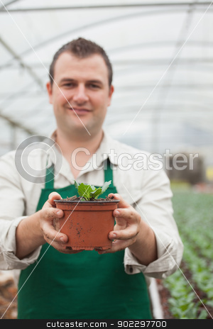 Cheerful gardener holding a plant stock photo, Cheerful gardener holding a plant in grennhouse by Wavebreak Media