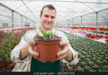 Man holding a potted plant up stock photo, Man holding a potted plant up and smiling in greenhouse by Wavebreak Media