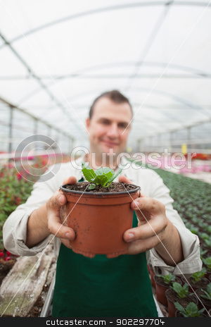 Employee holding up potted plant stock photo, Employee holding up potted plant in greenhouse garden center by Wavebreak Media