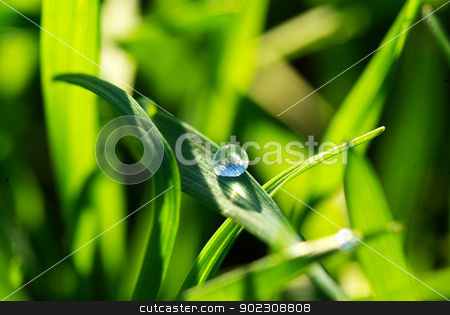 drop on grass  stock photo, Dew drop on a blade of grass  by Vitaliy Pakhnyushchyy