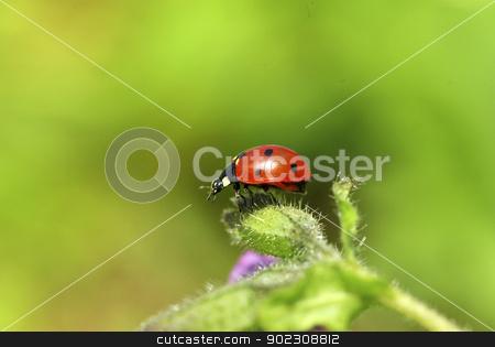 ladybug  stock photo, red ladybug on green grass isolated on green by Vitaliy Pakhnyushchyy