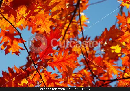 autumn leaves  stock photo, autumn leaves background in a sunny day by Vitaliy Pakhnyushchyy