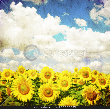 sunflower field stock photo, vintage image of sunflower field by Vitaliy Pakhnyushchyy