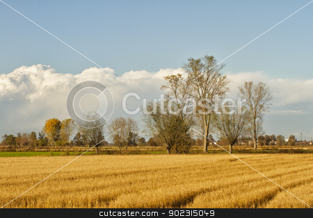 Field stock photo, Landscape of fields, with trees and clouds on the back by Fabio Alcini