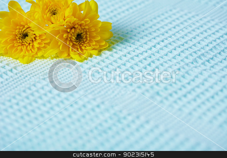 Contrasting composition - yellow flowers on blue background stock photo, Contrasting composition of yellow flowers on a blue fabric background by Alexey Romanov