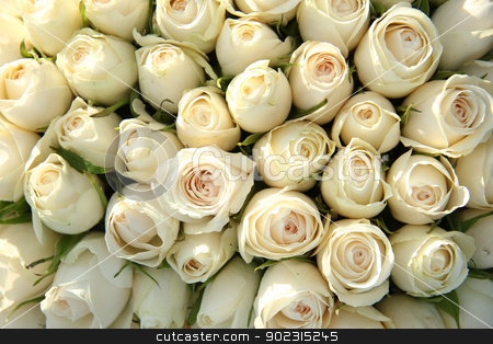 Group of white roses, wedding decorations stock photo, Big group of white roses, part of wedding decorations by Porto Sabbia