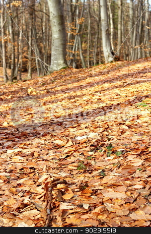 forest ground stock photo, forest ground with faded leaves in late autumn by coroiu octavian