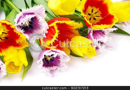 tulips  stock photo, bouquet of the fresh tulips on white background by Vitaliy Pakhnyushchyy