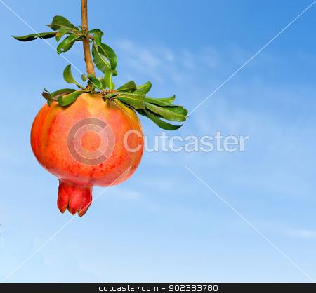 Pomegranate on sky background stock photo, Pomegranate on sky background by vaeenma