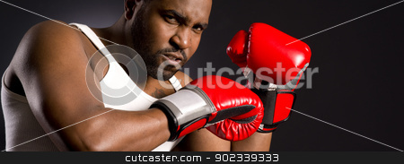 Mad Boxer Looks Angrily at the Camera stock photo, This guy is serious  by Christopher Boswell