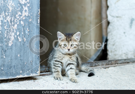portrait of small baby cat stock photo, portrait of small baby cat, rural scene, shallow focus by Artush