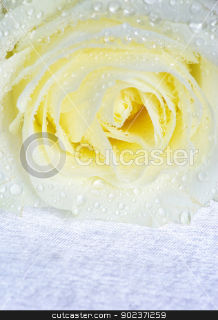 white roses stock photo, Close-up shot of a white roses by Vitaliy Pakhnyushchyy