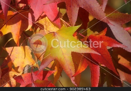 Autumn leaves stock photo, Autumn leaves by Zvonimir Atletic