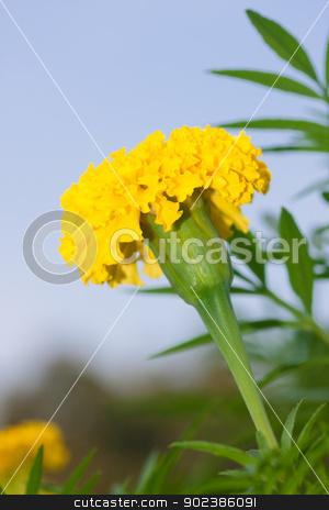 Beautiful Flower plant stock photo, Beautiful Flower by iroomm
