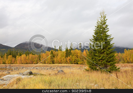 Autumn landscape with a fur-tree stock photo, Autumn landscape with a fur-tree against mountains by Alexey Romanov