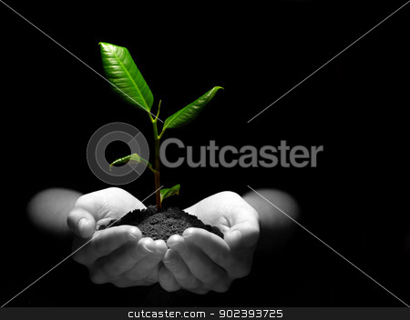 plant in hands stock photo, Hands holding sapling in soil on black by Vitaliy Pakhnyushchyy