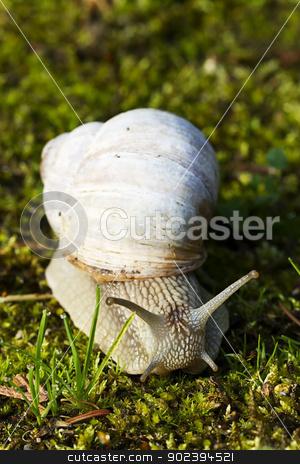 closeup of a snail on green moss stock photo, closeup of a snail on green moss by Rob Stark