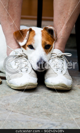 Cute dog looking for protection stock photo, Young, cute dog looking for protection through the legs of his by Paolo Gallo