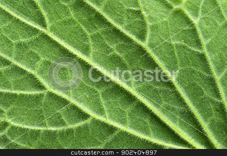 leaf texture stock photo, structure of leaf natural background by Vitaliy Pakhnyushchyy