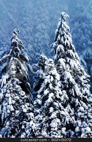 Snow Covered Evergreen Trees Abstract at Snoqualme Pass Washingt stock photo, Snow Covered Trees Twisted Into Weird Shapes on Snow Mountain at Snoqualme Pass Washington. by William Perry