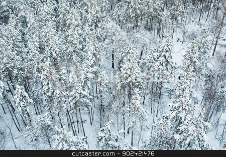 aerial view of winter forest stock photo, Aerial view of snow-covered forest in Siberia by Aikon