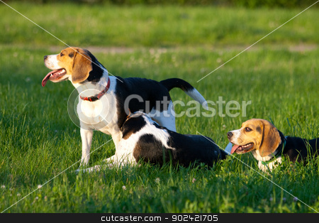 Beagle dogs stock photo, Happy beagle dogs in a park by Jan Remisiewicz