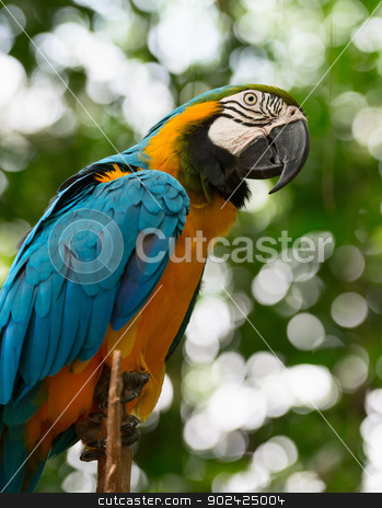 Big macaw parrot in nature stock photo, Big macaw bird parrot (Ara ararauna) sitting on log with green leaves on background by Iryna Rasko