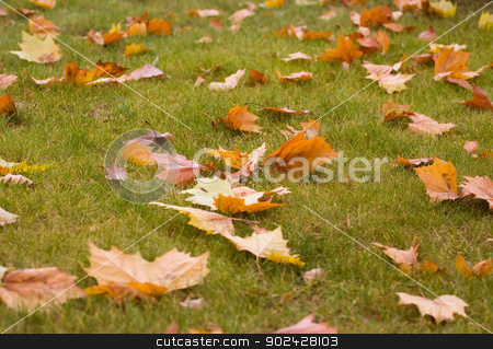 Leaves on the ground stock photo, Fall leaves on the ground by GPimages