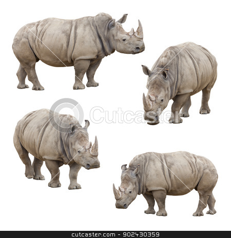 Set of Rhinoceros Isolated on a White Background stock photo, Set of Four Rhinoceros Isolated on a White Background. by Andy Dean