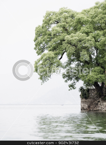 Tree next to a lake stock photo, Tree on Barahi Temple island in Pokhara, Nepal, vertical shot by Dutourdumonde