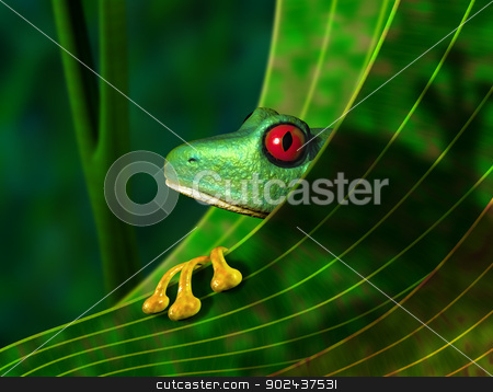 Endangered Rainforest Tree Frog stock photo, Illustration of an endangered red eyed tree frog peering from behind a leaf in the rainforest by Paul Fleet
